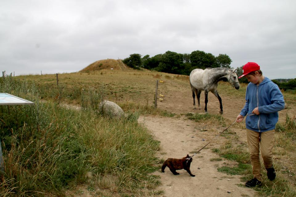 Пастбище для лошадей около кургана Ельсхой / Jelshøj