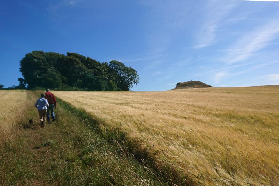 Дорожка между ржаным и пшеничным полем