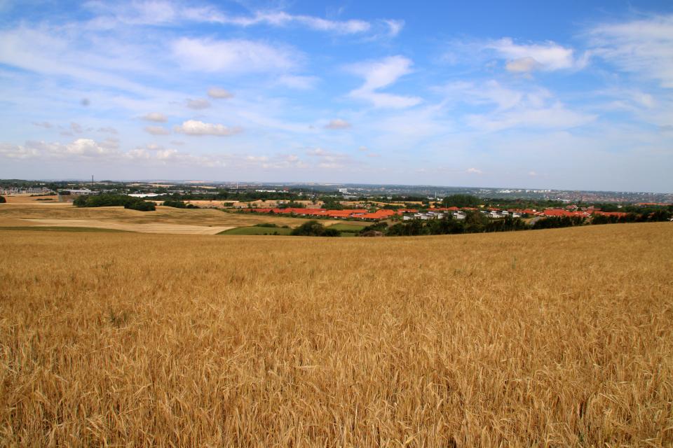 Вид с кургана Ельсхой ржаное поле и на южную часть г. Орхус