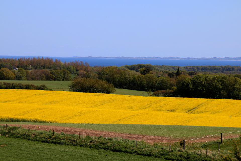 Вид с кургана Ельсхой с зумом на рапсовое поле и остров Самсё