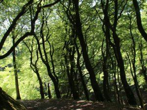 Лес троллей Фуссинг