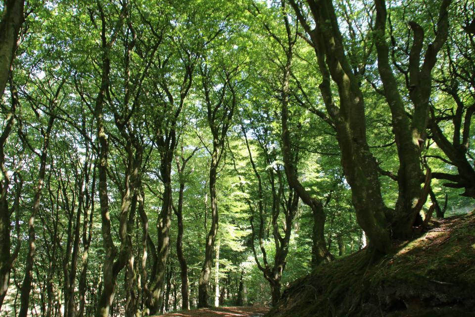 Буковый лес троллей Фуссинг. Фото 20 июл. 2018, г. Рандерс / Randers, Дания