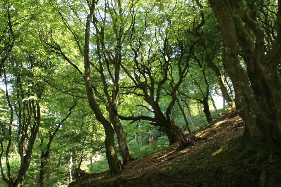 Старый лес троллей Фуссинг. Фото 20 июл. 2018, г. Рандерс / Randers, Дания