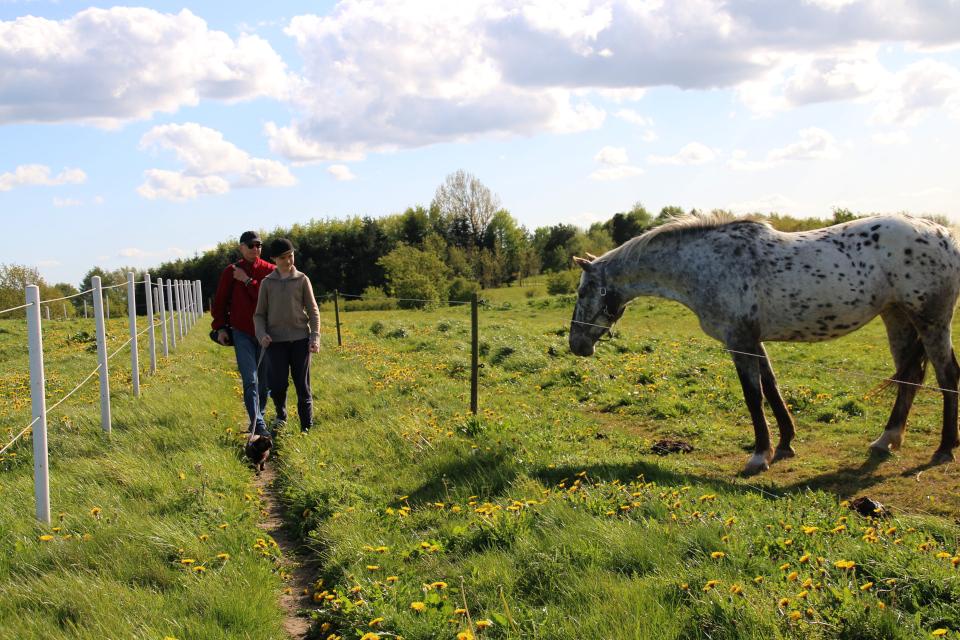 Тропинка вдоль полей с лошадьми