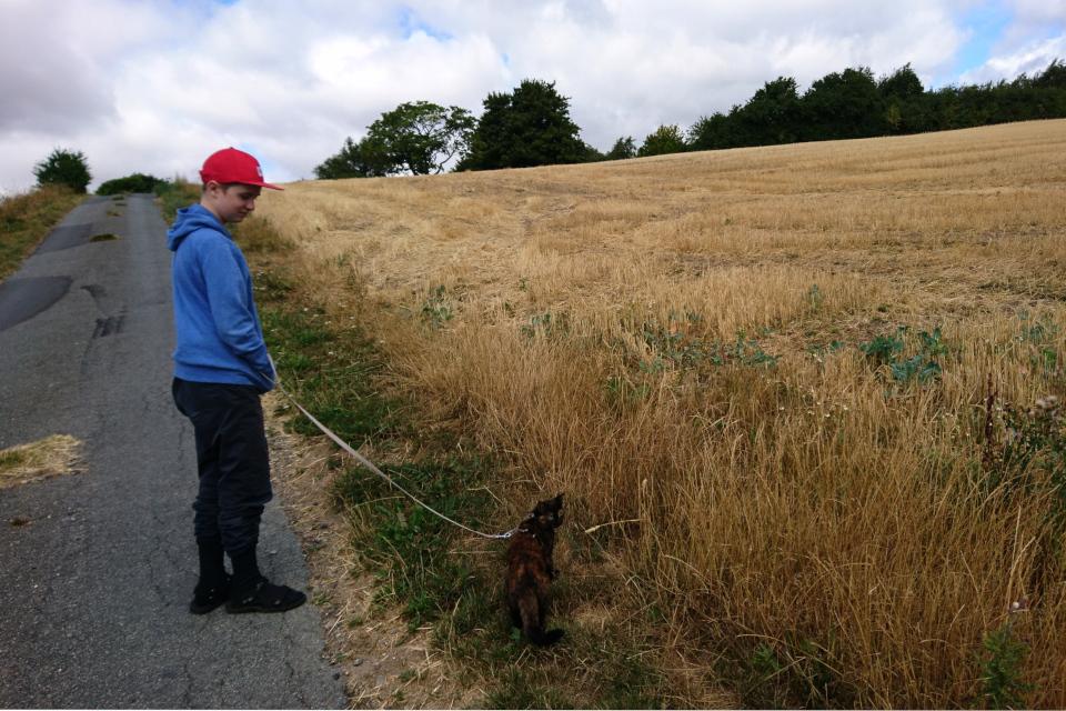 Дорога к кургану Тульсхой (Tulshøj) через пшеничное поле