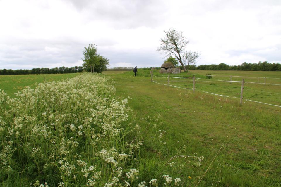 Дольмен 50 кр Стенвад посреди поля. Фото 24 мая 2020, г. Стенвад / Stenvad, Дания