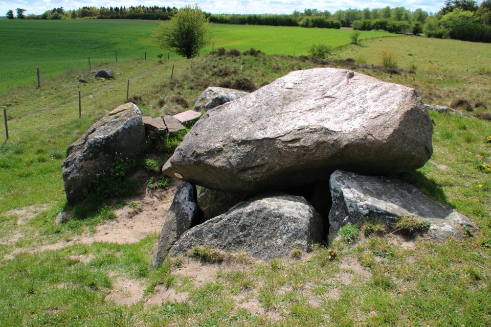 Вид на дольмен сверху. Возле камня-мегалита растет чесночница черешчатая
