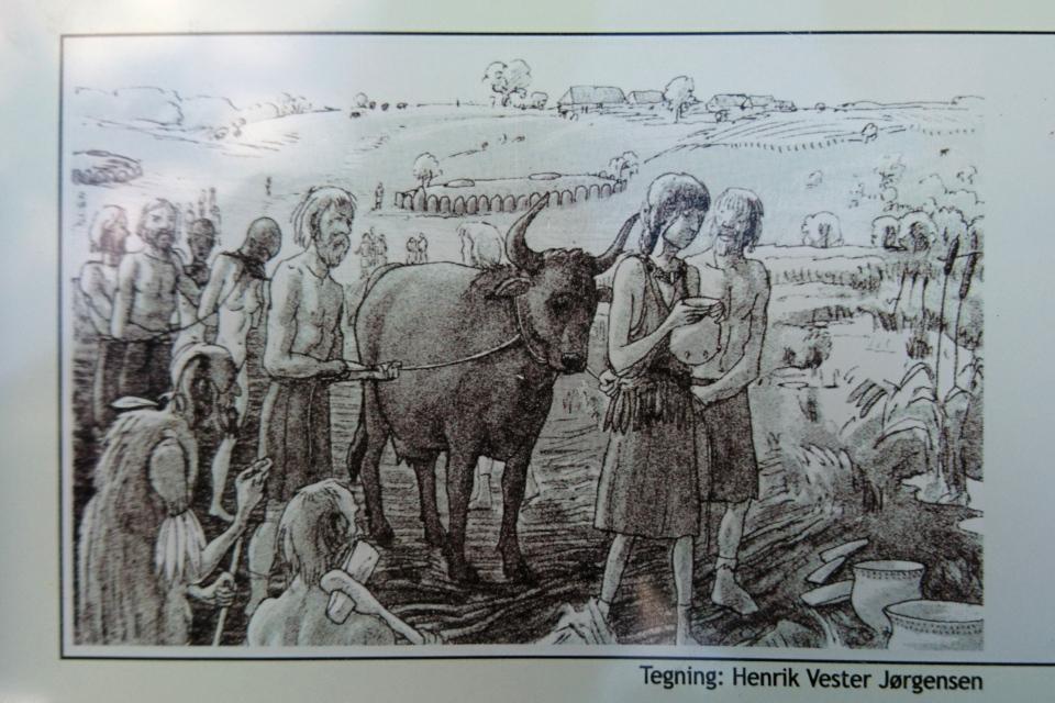 Иллюстрация с информационного щита возле заросшего озера
