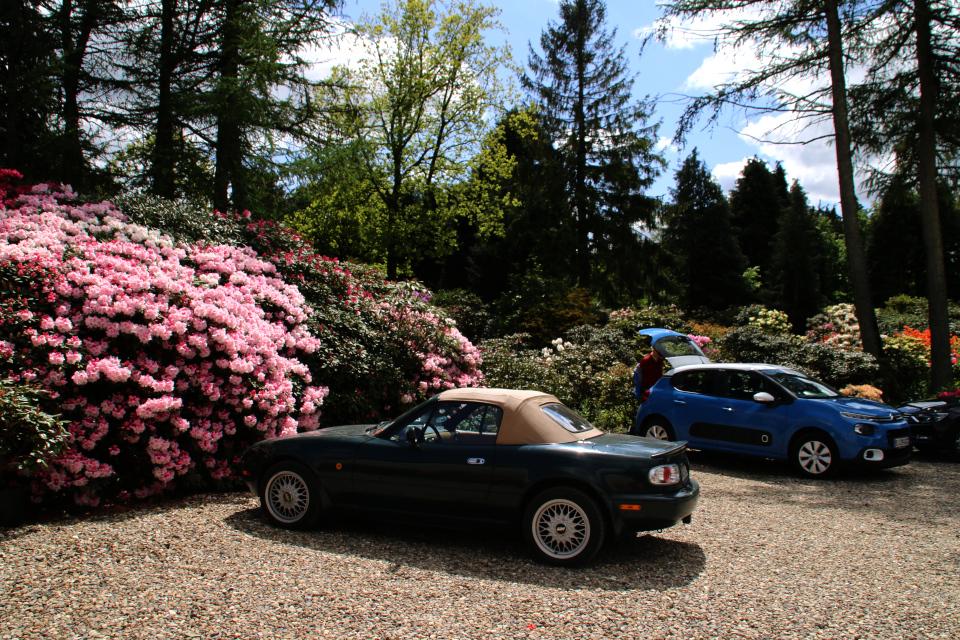 Парковка у входа в питомник и парк рододендронов Rhododendron-Haven, Дания