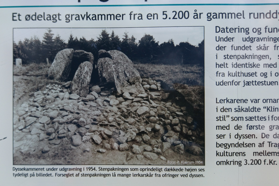 Так выглядел разрушенный дольмен в 1954 году. Мегалиты Туструп, Дания