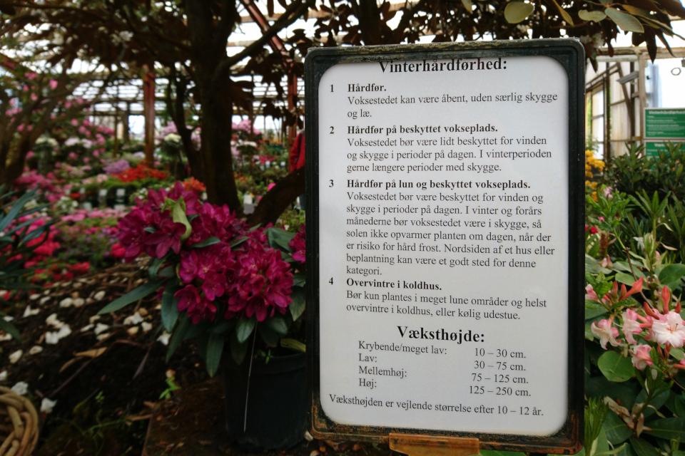 Табличка с описанием основных характеристик рододендронов