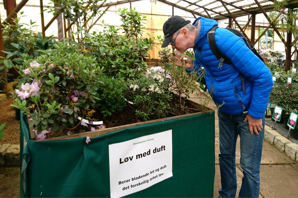 Рододендроны с ароматными листьями (Løv med duft)