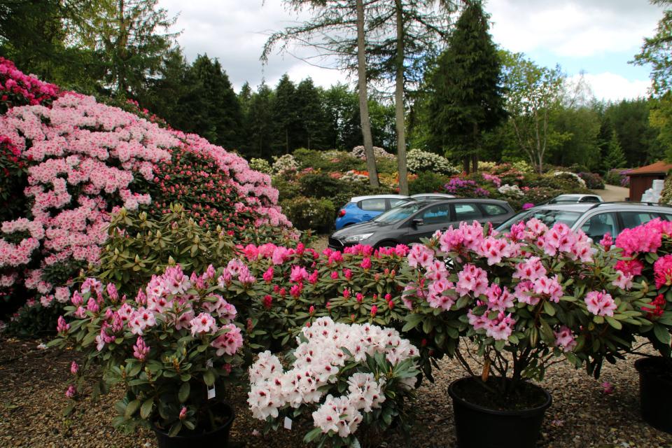 "Парковка возле парка и питомника ""Rhododendron-Haven"""