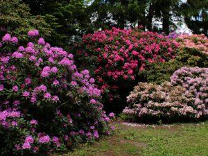 Парк рододендронов Тёрринг