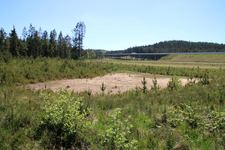 Высохший дождевой бассейн между лесом и дорогой