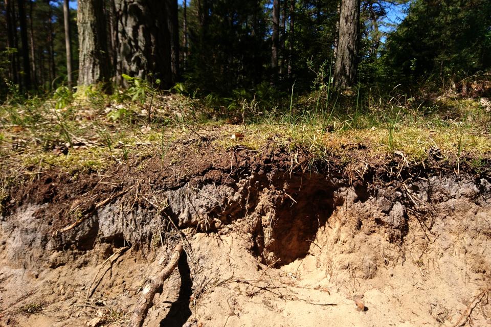 Песчаная земля с тонким верхним слоем, обогащенным гумусом