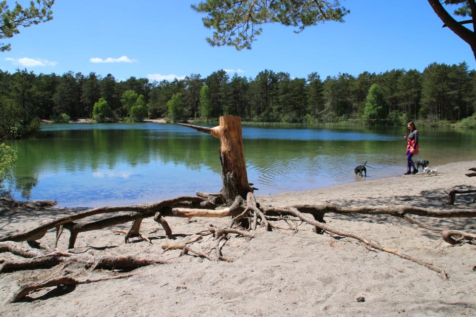 Берег озера Шобье (дат. Schoubyes Sø), Дания