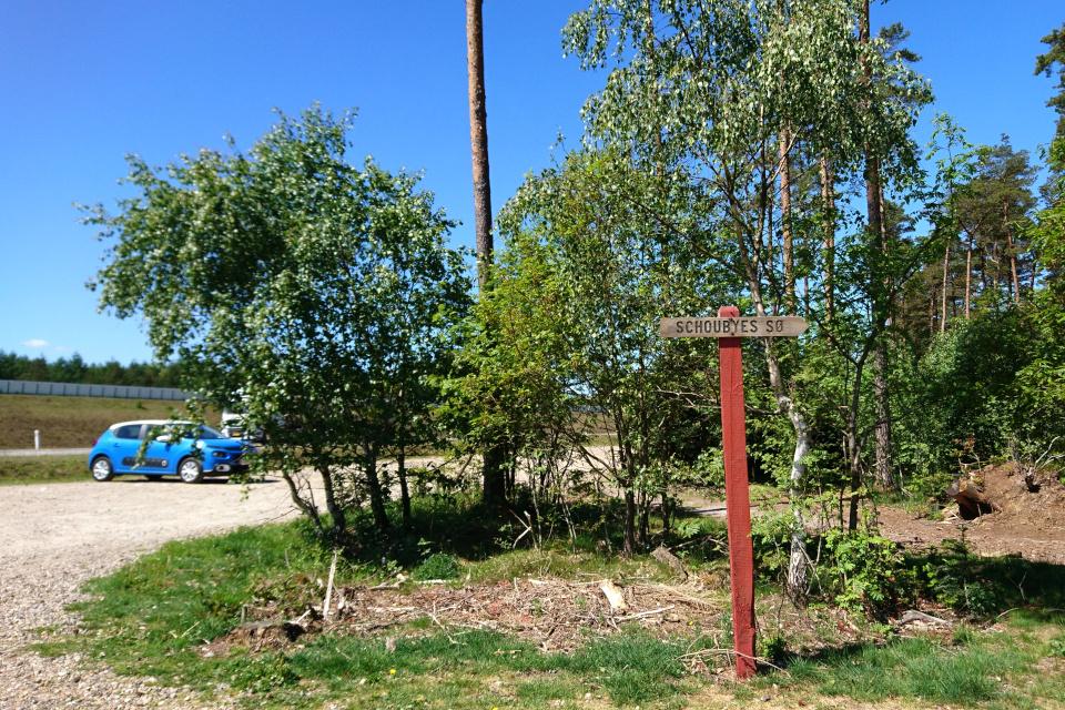 Парковка возле леса с озером Шобье (Schoubyes Sø), Дания