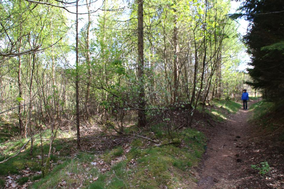 Доисторические дороги в три ряда, г. Аллингобро / Allingåbro, Дания