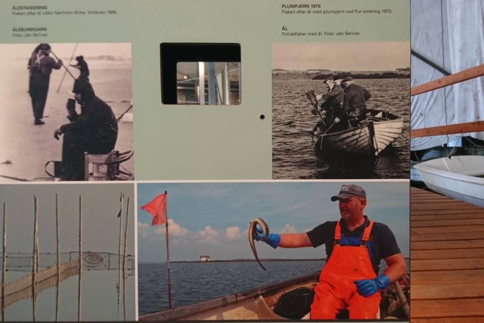 Фотографии ловли угря рыболовами-любителями в 1970 - 2000 годах в Дании