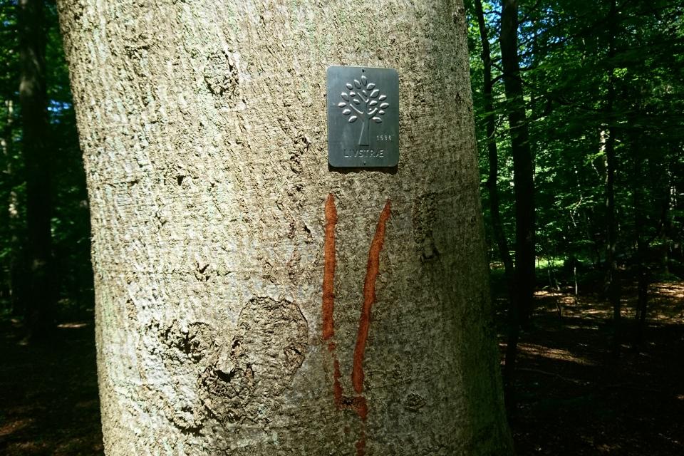 Дерево жизни - бук. Металлический сертификат (Livstræ)