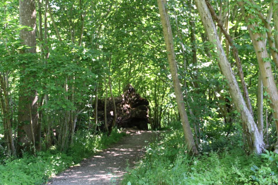 Старый дуб, который стал местом обитания для мышей и насекомых
