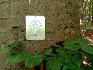 Деревья жизни в лесу Мосгорд
