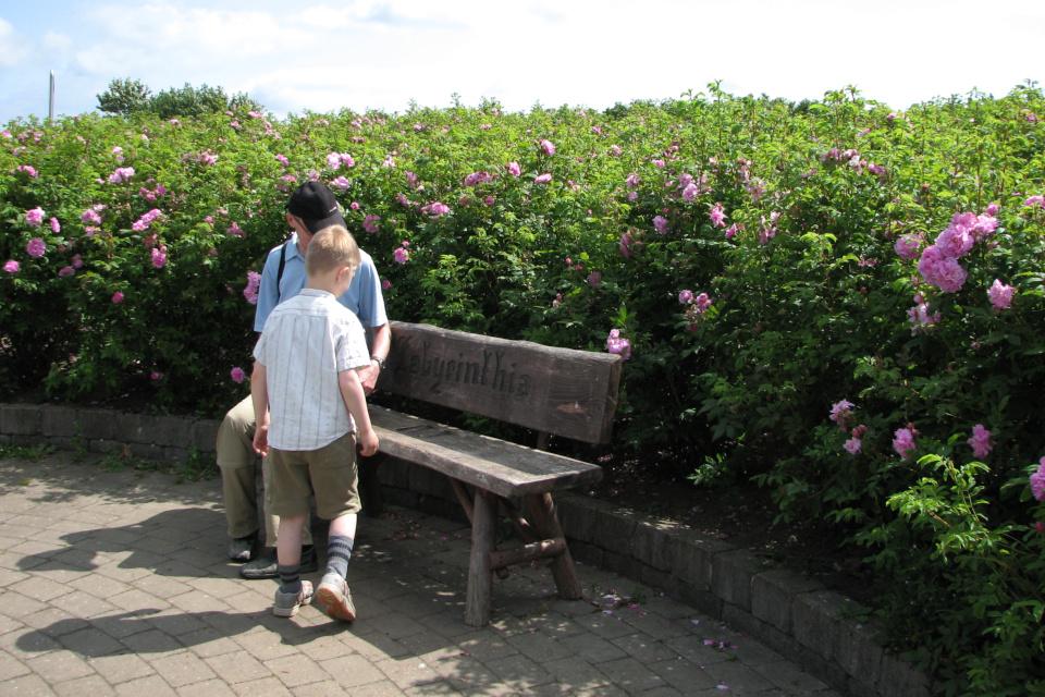 Скамеечка посреди лабиринта из роз в парке Лабиринтия (Labyrinthia)