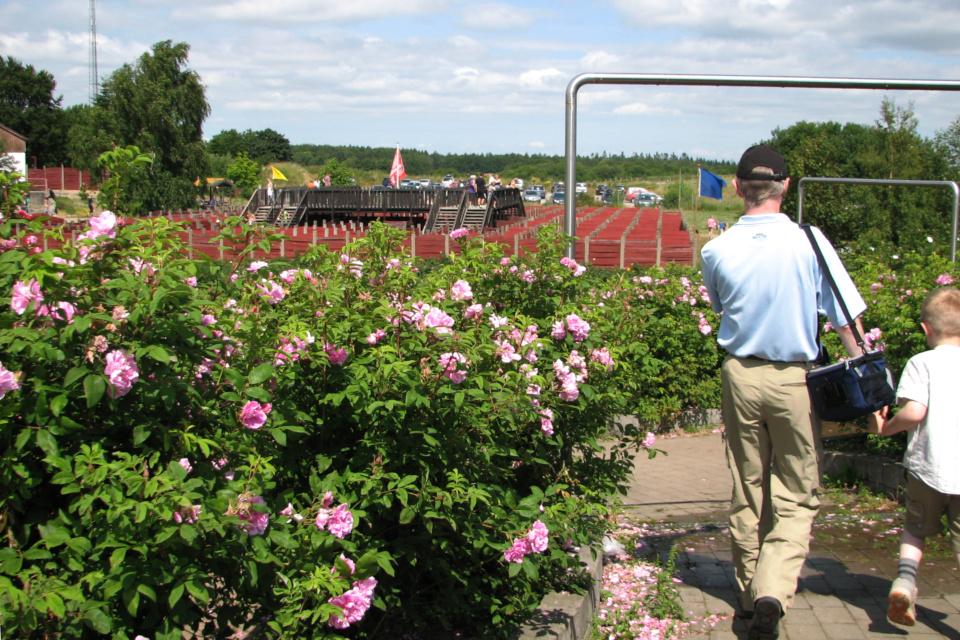 В розовом лабиринте. Фото 16 июл. 2013, парк Лабиринтия (Labyrinthia), Дания