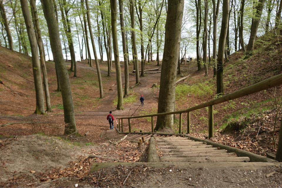 Лестница в буковом лесу возле моря, Дания