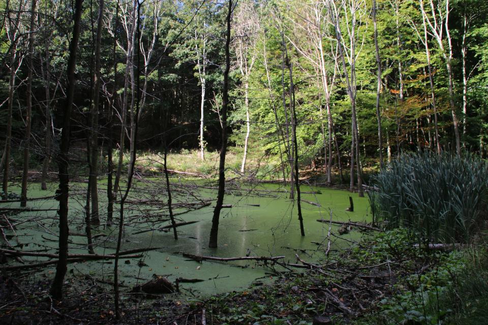 Заболоченный участок леса Марселисборг