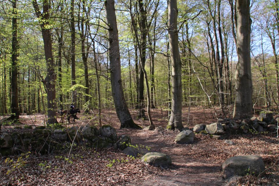 Каменные траншеи (дат. stendige) в лесу Марселисборг