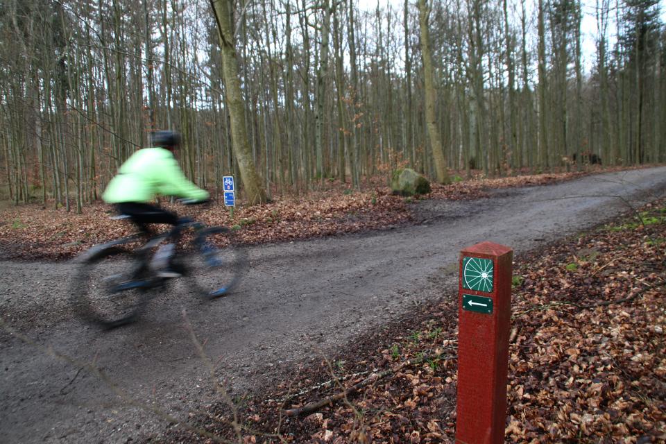 Велосипедные маршруты в буковом лесу Марселисборг