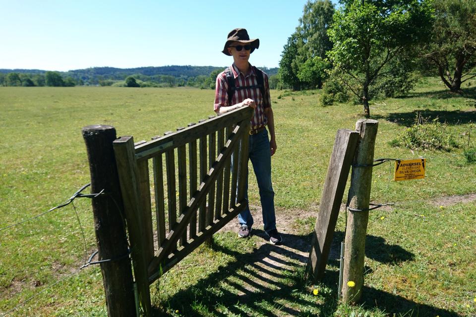 Ограда для крупного рогатого скота в лесу