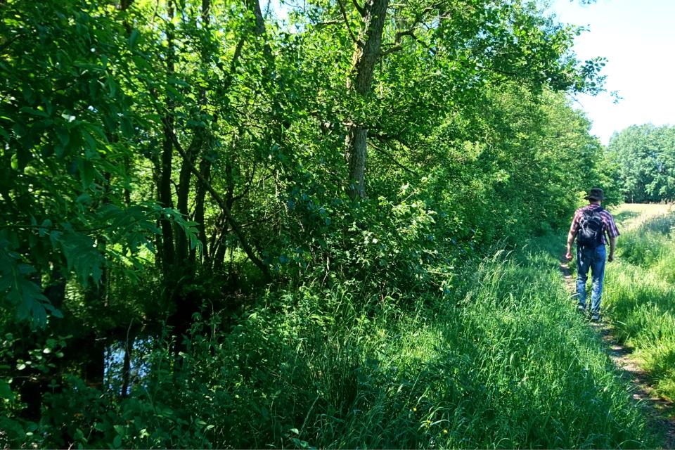 Тропинка вдоль реки Гудено (Gudenå) в лесу бывшего монастыря Виссинг