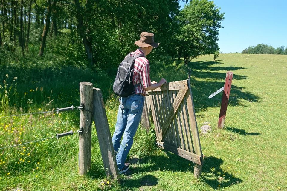 Ограда для крупного рогатого скота возле леса бывшего монастыря Виссинг