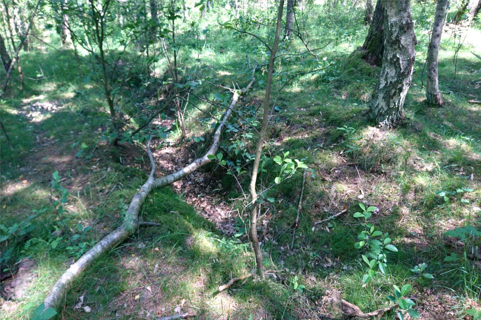 Окопы в виде зигзагов в лесу возле бывшего летного поля Рю
