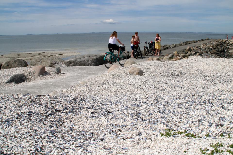 Берег, усыпанный ракушками. Фото 3 июн. 2020. г. Лёгстёр / Løgstør, Дания