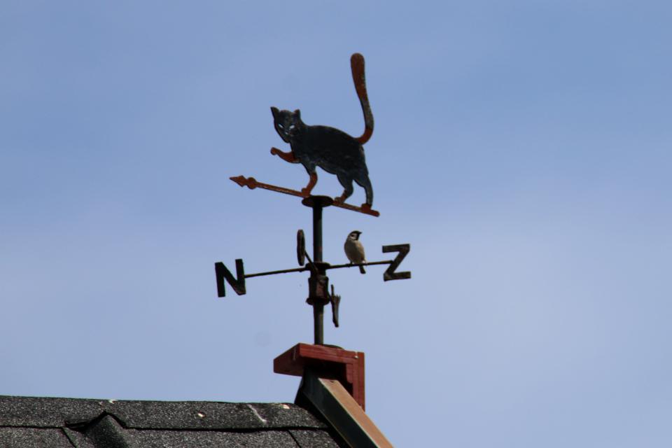 Флюгер с кошкой на крыше красивого дома, г. Лёгстёр / Løgstør, Дания