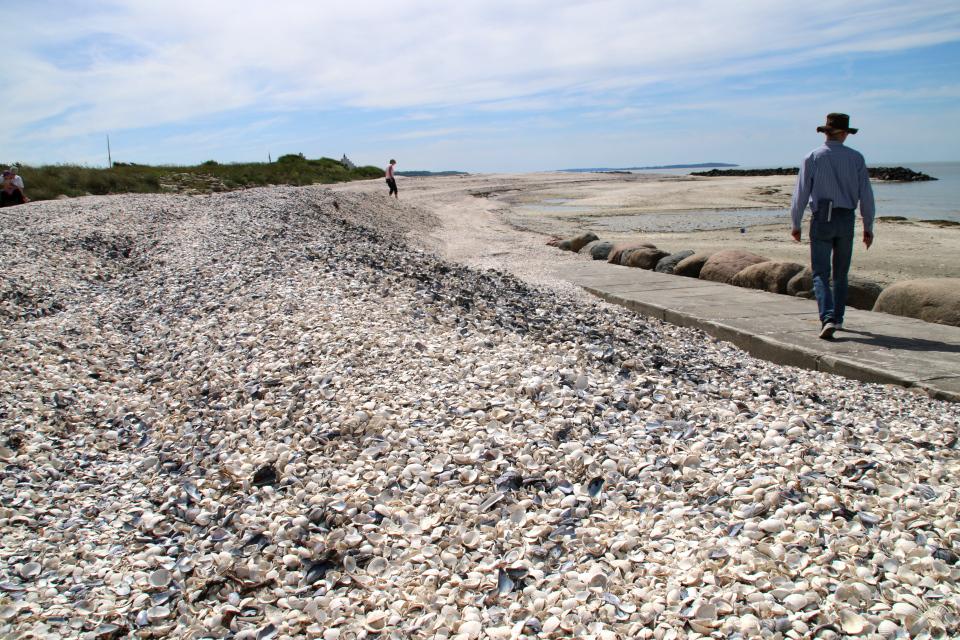 Берег с ракушками моллюсков вдоль канала Фредерика 7, Дания