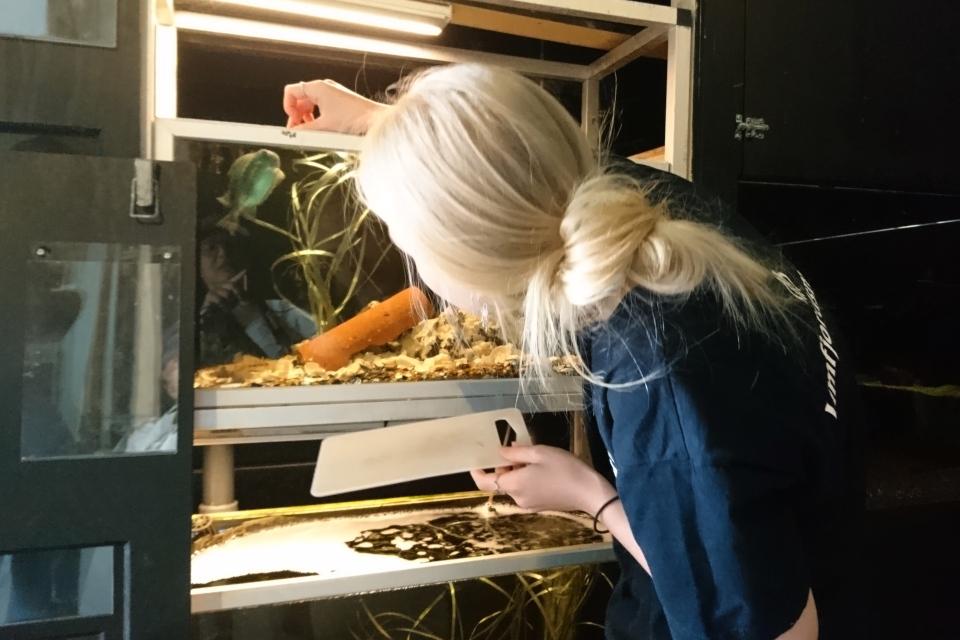 Сотрудница музея Лимфьорд кормит рыбу Пинагор
