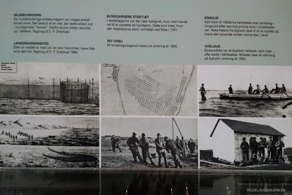 Ловля сельди в 17 - 19 столетиях.Лимфьорд
