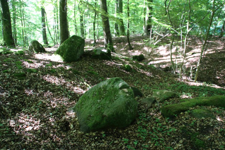 Разрушенный дольмен в буковом лесу Мосгорд, г. Хойбьерг / Højbjerg, Дания