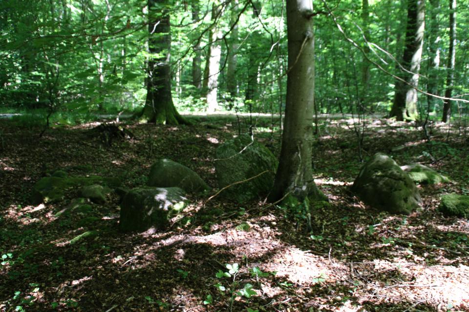 Бук пророс посреди каменного мегалита в лесу Мосгорд
