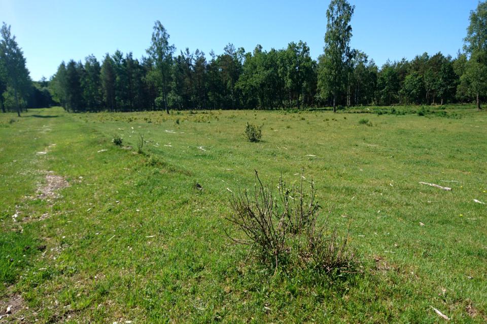 Бывшее летное поле (Rye Flyveplads), где позже размещались бараки с беженцами