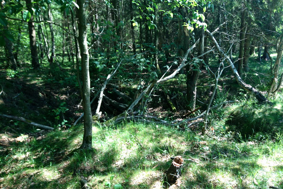 Длинные окопы в лесу возле бывшего летного поля