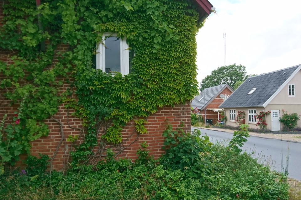 Вид на центральную улочку со стороны дома, поросшего виноградом