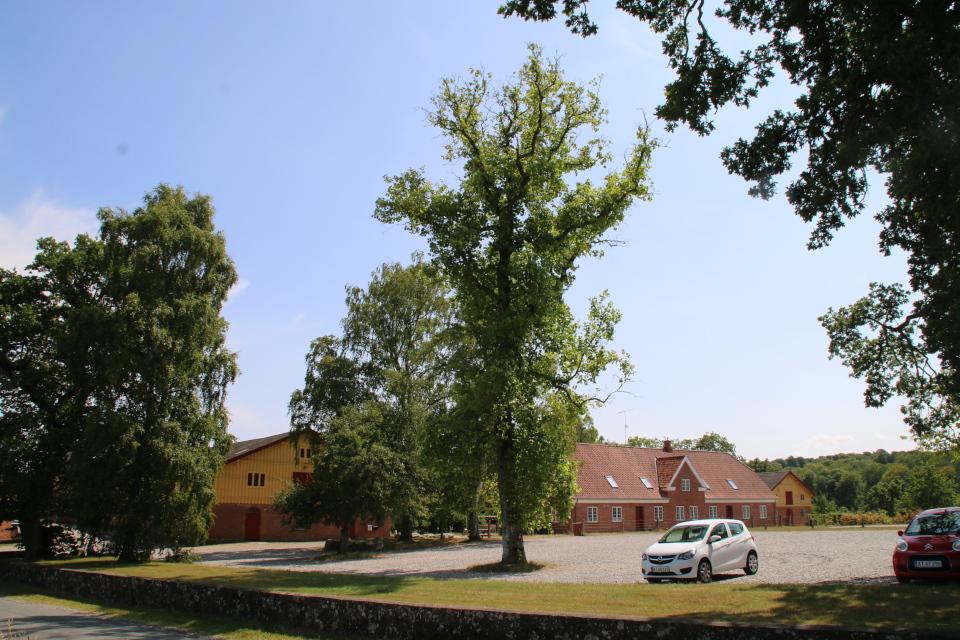 Тюльпановое дерево во дворе старинного поместья Фуссингё