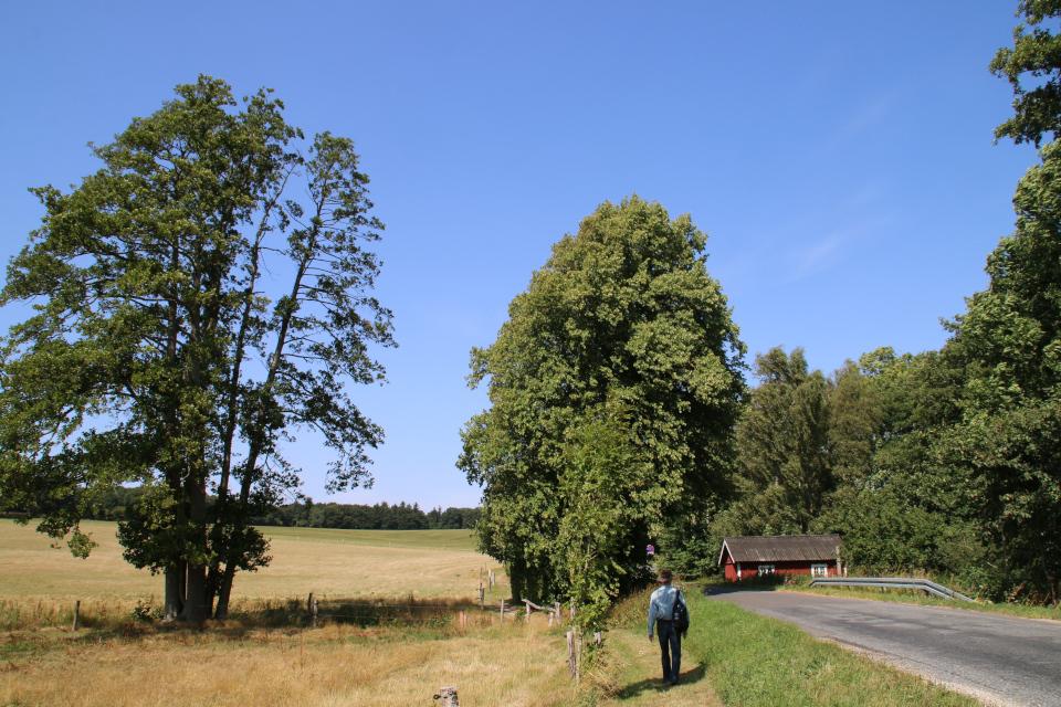 Тропинка вдоль асфальтовой дороги с через ручей, поросший ольхой (слева)