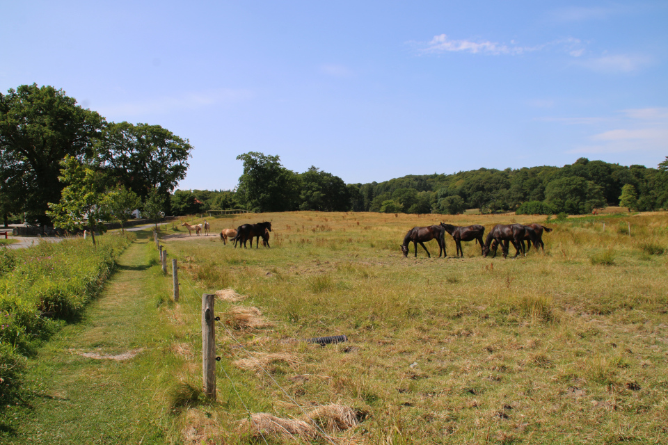 Лошади на пастбище возле дороги к поместью Фуссингё